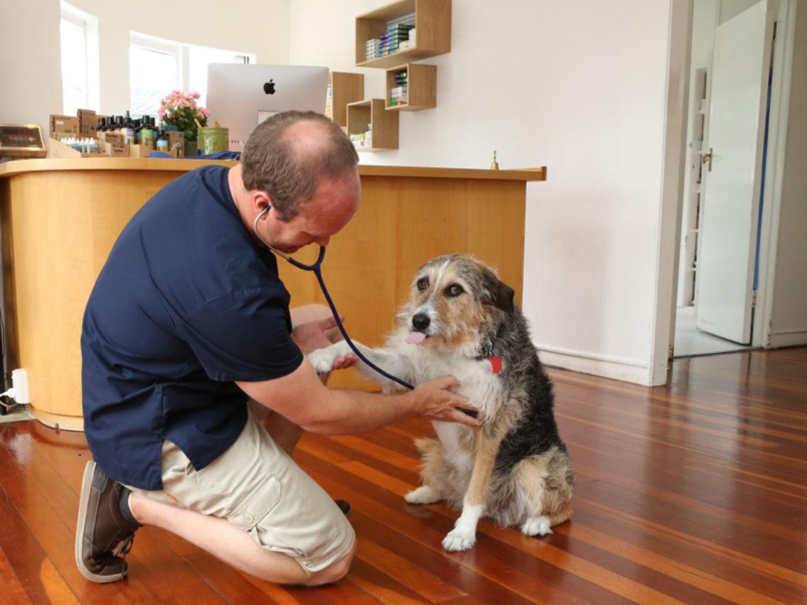 Rothesay Bay Vey Older Pets Health Assessment